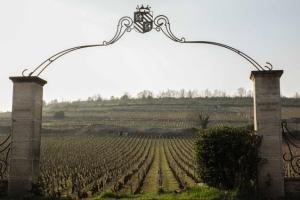 Ruta des grands crus borgoña montrachet