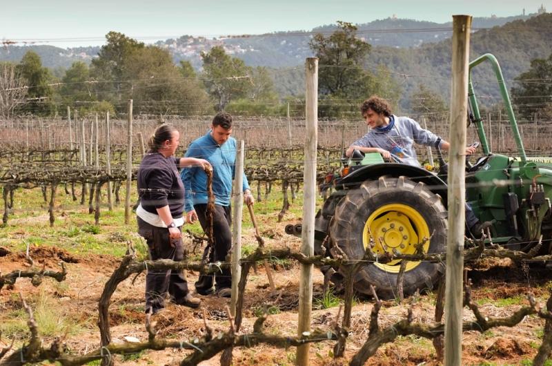 vinyes i vins de Barcelona
