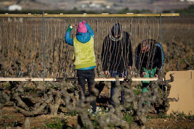 cultivare vino etiquetas originales