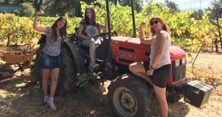 sonoma napa valley wine girls